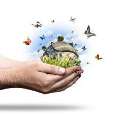Environmental translation (text or documents)